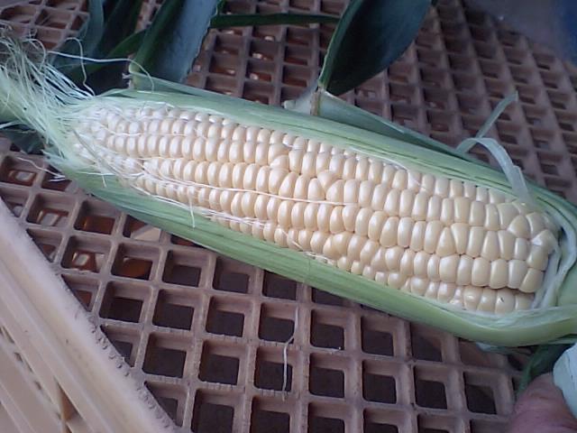 corn1020