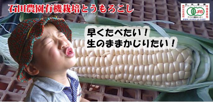石田農園とうもろこし
